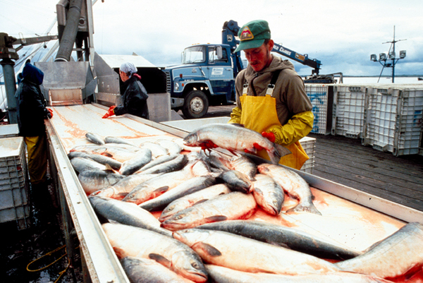 Unalaska Dutch Harbor Alaska Fishing
