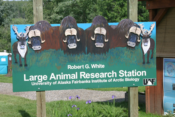 Fairbanks Alaska Large Animal Research Station