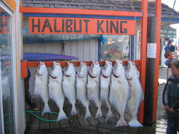 Homer Alaska Fishing